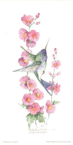 Broad-Billed Hummingbird 12 x 6 lithograph Watercolor Bird, Watercolor Animals, Watercolor Paintings, Hummingbird Art, Butterfly Drawing, Bird Pictures, Fabric Painting, Botanical Illustration, Beautiful Birds