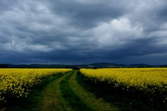fields photograph - Google Search