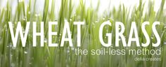 delia creates: Wheat Grass