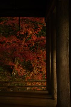 Autumn leaves at Shorin-in temple, Kyoto, Japan