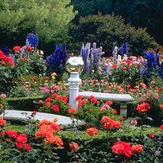 butchart+gardens+roses | rose garden the rose garden summer courtesy the butchart gardens