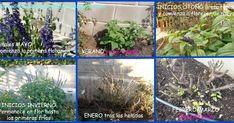 Blog de jardinería. Cuidado cultivo rosales. Diseño creación evolución jardín Sierra Oeste Madrid. Experiencias plantas, jardinería ecológica