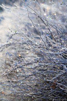 november-gardening-tips-in-the-northern-hemisphere - Your Winter Garden 1 I Love Winter, Winter Snow, Winter Time, Winter Season, Winter Christmas, Hello Winter, Merry Christmas, Dark Tales, Foto Macro
