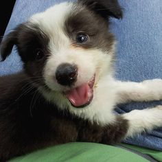 Please follow, like and post feedback if this pet is cute:) #cats #catsagram #catstagram #instagood #kitten #kitty #kittens #pets #animal  #petstagram #petsagram  #catsofinstagram #ilovemycat #instagramcats #catoftheday #lovecats #lovekittens #catlover #instacat  #dog #puppy #pup #dogsofinstagram #ilovemydog