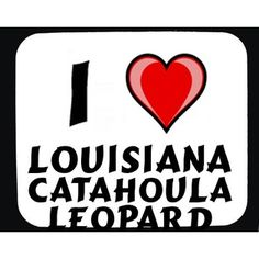 Love me some Catahoula's... proud new parent of a Catahoula black lab mix....