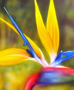 Bird Of Paradise Revisited Painting  - Bird Of Paradise Revisited Fine Art Print