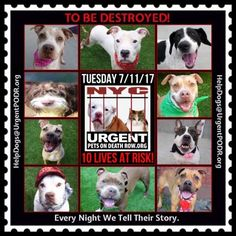 TO BE DESTROYED 07/11/17 - - Info   To rescue a Death Row Dog, Please read this:http://information.urgentpodr.org/adoption-info-and-list-of-rescues/  To view the full album, please click here:http://nycdogs.urgentpodr.org/tbd-dogs-page/ -  Click for info & Current Status: http://nycdogs.urgentpodr.org/to-be-destroyed-4915/