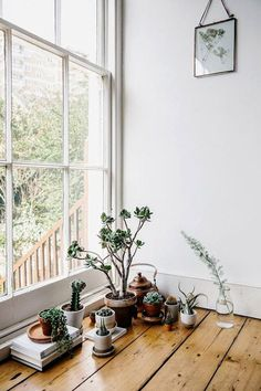 living simply with plants.