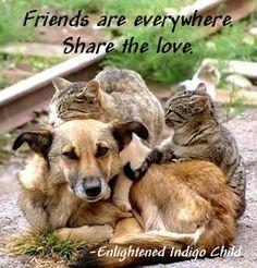 Friends are everywhere. Share the love. -Enlightened Indigo Child
