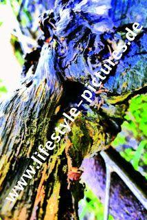 Exclusiv-Pictures: Unikat 70/100 cm auf 5 mm Forex 199.-€