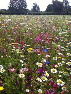 A mix of wild flowers and pollinator friendly cultivars, Field of Dreams,2012....South Africa