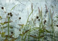 """""""Seedheads"""" Images of Nether Edge .Kath Williamson, I love this, like a visual poem"""