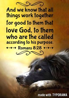 """Bible verses KJV Romans """"And we know that all things work together for good to them that love God, to them who are the called according to his purpose. Bible Verses For Girls, Bible Verses Kjv, Favorite Bible Verses, Bible Quotes, Religious Quotes, Spiritual Quotes, Christian Life, Christian Quotes, Spiritual Pictures"""