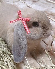 ♥SWEET BUNNY WITH BOW