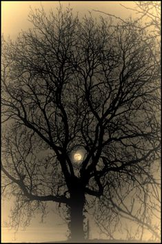 Moon by Alan Sheers