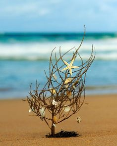 Tumble Weed Christmas Tree on the Beach. Beach Christmas Card: http://beachblissliving.com/beach-christmas-card-photo-ideas/