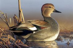 duck stamp winners | 2011 Federal Duck Stamp Contest Second Place Winner -- Adam Grimm of ...