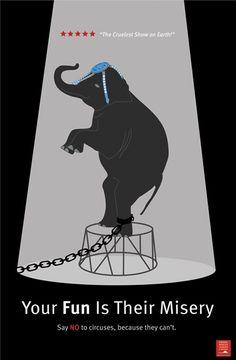 Please boycott all circuses that use animals.... Stop Animal Cruelty, Animal Testing, Animal Rescue, Orcas, Desgin, Animal Activist, Vintage Poster, Animal Protection, Vegan Animals
