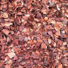 kakaoflis