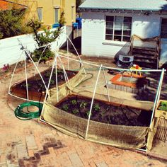 This is our own little urban garden