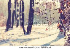 Kostenloses Bild auf Pixabay - Winter, Schnee, Eis, Wald, Bäume