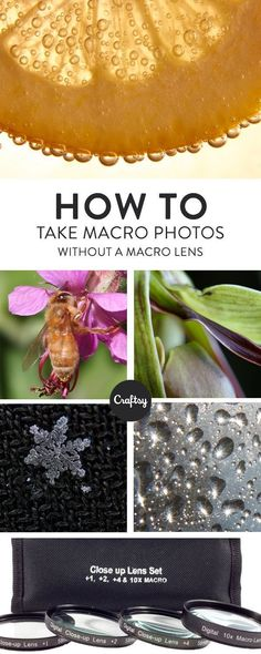 These top tips will teach you how to take incredible macro photos without having to buy a macro lens!