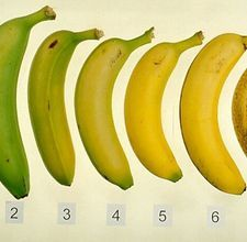 How to freeze Bananas for Smooties, Chocolate Covered, etc...