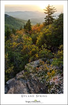 https://flic.kr/p/GLRcCi | Upland Spring | Top Craig, Blue Ridge Parkway, Grandfather Mountain, North Carolina  Spring arrives a little later at the higher elevations.  This is along the Cragway Trail from last year.