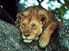 http://hotmagicphotos.blogspot.com/
