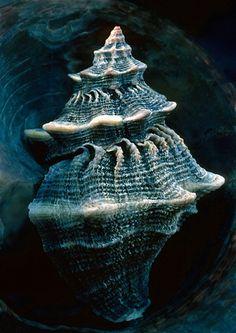 Blue | Blau | Bleu | Azul | Blå | Azul | 蓝色 | Color | Form | Texture |  seashell
