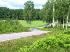Landscape - Summer road in Sweden, Halla | by Olof S