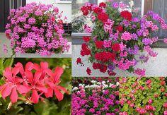 Floral Wreath, Patio, Wreaths, Flowers, Plants, Decor, Balcony, Floral Crown, Decoration