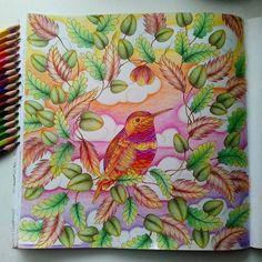 ARTES DA YLA Do Livro Reno Animal De Millie Marotta