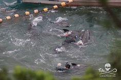 September 7th, 2013 Bottlenose Dolphin Captive Selection https://www.facebook.com/media/set/?set=a.235867513230153.1073741834.109164785900427=1 #CoveGuardians #Tweet4Taiji #defendconserveprotect #gaiatsu