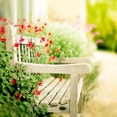 red flowers growing through a bench