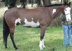 HorseAdvice.com Equine & Horse Advice: Not a roach back .. but what??