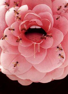 The Honey Pot | Bill Mayer