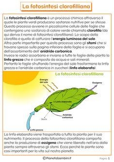Tante schede didattiche da stampare sulla fotosintesi clorofilliana per bambini della scuola primaria con riassunto, disegni, verifiche ed esperimenti