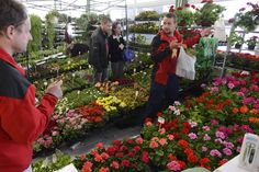 "The ""ABC stavebníctva – Záhrada"" gardening expo is underway in Prešov until 18:00 tomorrow (Friday). If you have green fingers, then this is the place to be. Photos: TASR"
