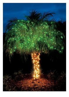 Palm Tree with Lights - Palm Press Tropical Christmas, Beach Christmas, Christmas Tree, Boxed Christmas Cards, Holiday Cards, Perfect Photo, Palm Trees, Happy Holidays, Greeting Cards