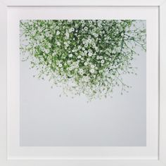Gypsophila by Marabou Design at minted.com