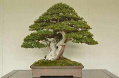 Another master piece of what the mind can do with a wonderful tree..