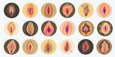 """People typically call the whole landscape of female genitalia the """"vagina."""" The visible parts, the inside, the surrounding area, the…"""
