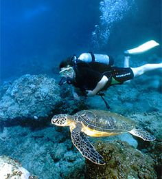 Best day ever for me scuba diving was when I saw a Sea Turtle <3