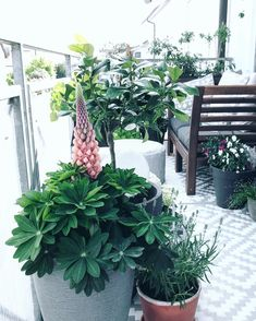 Entdecke Noch Mehr Wohnideen Auf COUCHstyle #living #wohnen #wohnideen  #einrichten #interior #COUCHstyle #balkon #pflanzen #blumen #garten #  Terrasse