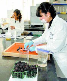Elaboran recubrimientos biodegradables para conservar las propiedades de los alimentos