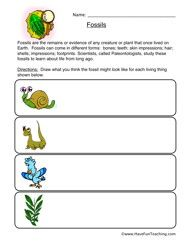 classifying animals worksheet mammals fish or birds classifying animals worksheets and. Black Bedroom Furniture Sets. Home Design Ideas