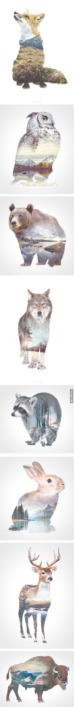 Incredible Double-Exposure Animal Portraits - 9GAG