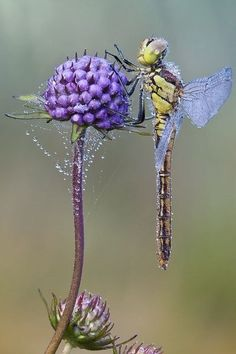 The coolest and most beautiful in nature of insects Photos Beautiful Bugs, Beautiful Butterflies, Amazing Nature, Beautiful Creatures, Animals Beautiful, Cute Animals, Foto Macro, Mundo Animal, Bugs And Insects