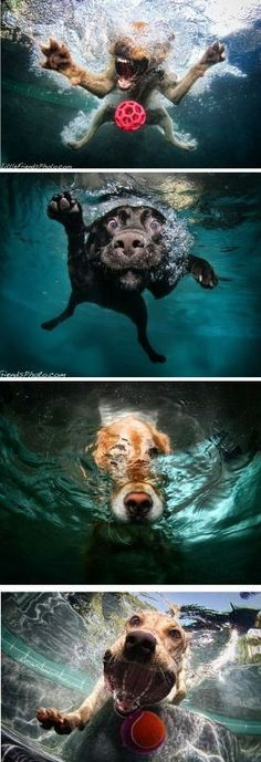 Inspirational Dog Portrait Photographs part 2 | Home